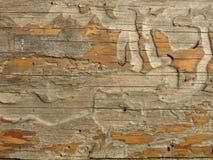 Παλαιός ο ξύλινος πίνακας πουφαγώθηκε από τα σκουλήκια και τους κανθάρους στοκ εικόνα