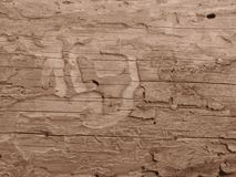 Παλαιός ο ξύλινος πίνακας πουφαγώθηκε από τα σκουλήκια και τους κανθάρους στο χρώμα σεπιών στοκ φωτογραφίες