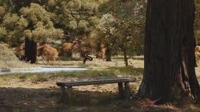Παλαιός πάγκος κάτω από ένα δέντρο στο πράσινο πάρκο, ειρηνικό υπόλοιπο υπαίθρια, βοτανικός κήπος απόθεμα βίντεο