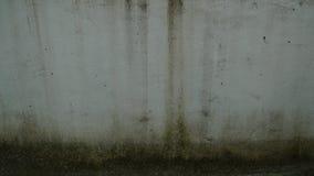 παλαιός τοίχος βρύου Στοκ Εικόνες