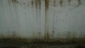 παλαιός τοίχος βρύου Στοκ Φωτογραφίες