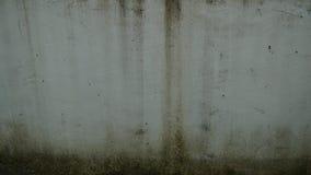 παλαιός τοίχος βρύου Στοκ Φωτογραφία