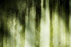 παλαιός τοίχος βρύου Στοκ εικόνα με δικαίωμα ελεύθερης χρήσης