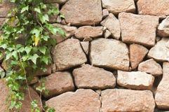 παλαιός τοίχος πετρών κισσών ανασκόπησης Στοκ φωτογραφία με δικαίωμα ελεύθερης χρήσης