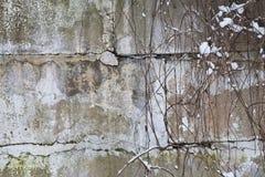 Παλαιός τοίχος φιαγμένος από σκυρόδεμα Στοκ Εικόνες