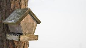 Παλαιός τροφοδότης πουλιών pinewood Στοκ Φωτογραφία