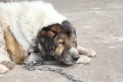 παλαιός υπαίθριος λυπημένος φύλακας βλαστών Στοκ φωτογραφία με δικαίωμα ελεύθερης χρήσης