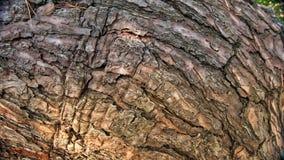 Παλαιός φλοιός δέντρων ως υπόβαθρο και σύσταση για τους σχεδιαστές στοκ φωτογραφία