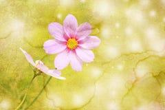 παλαιό έγγραφο λουλουδιών Στοκ εικόνες με δικαίωμα ελεύθερης χρήσης