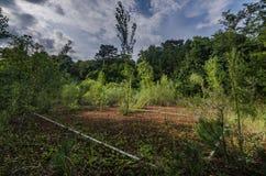 παλαιό γήπεδο αντισφαίρισης στο δάσος στοκ εικόνες