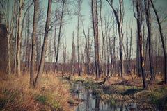 Παλαιό δάσος άνοιξη στον ηλιόλουστο καιρό στοκ φωτογραφία με δικαίωμα ελεύθερης χρήσης