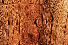 παλαιό δάσος σιταριού στοκ φωτογραφία με δικαίωμα ελεύθερης χρήσης