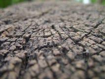 παλαιό δάσος σύστασης ανασκόπησης Στοκ Φωτογραφίες