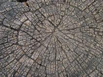 παλαιό δάσος σύστασης ανασκόπησης Στοκ φωτογραφίες με δικαίωμα ελεύθερης χρήσης