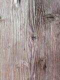 παλαιό δάσος σύστασης ανασκόπησης Στοκ εικόνα με δικαίωμα ελεύθερης χρήσης