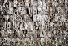 παλαιό δάσος σύστασης ανασκόπησης Στοκ Φωτογραφία