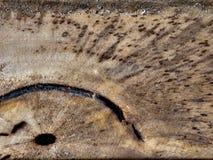 παλαιό δάσος σύστασης σιταριού ρωγμών στοκ εικόνες με δικαίωμα ελεύθερης χρήσης