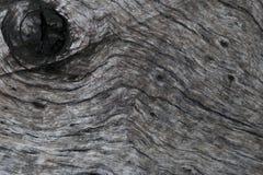 παλαιό δάσος σύστασης στοκ εικόνα με δικαίωμα ελεύθερης χρήσης
