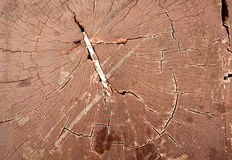 παλαιό δάσος σύστασης Στοκ φωτογραφίες με δικαίωμα ελεύθερης χρήσης