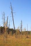 παλαιό δάσος Στοκ εικόνες με δικαίωμα ελεύθερης χρήσης