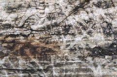 παλαιό δάσος στοκ φωτογραφία