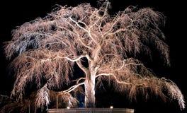 παλαιό δέντρο νύχτας κερα&sigm Στοκ Φωτογραφία