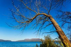 Παλαιό δέντρο πέρα από τη λίμνη Tarawera στοκ εικόνες με δικαίωμα ελεύθερης χρήσης