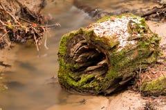 Παλαιό δέντρο στα ρεύματα νερού Στοκ Εικόνες
