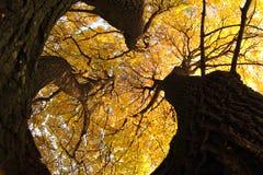 παλαιό δέντρο φθινοπώρου Στοκ φωτογραφίες με δικαίωμα ελεύθερης χρήσης