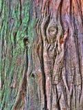 παλαιό δέντρο φλοιών Στοκ Φωτογραφίες