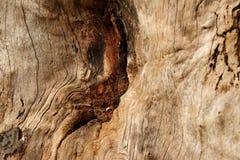 παλαιό δέντρο Στοκ Εικόνα