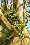 παλαιό δέντρο Στοκ φωτογραφία με δικαίωμα ελεύθερης χρήσης