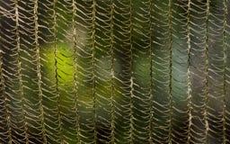Παλαιό δίχτυ του ψαρέματος στοκ φωτογραφία