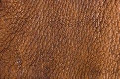 Παλαιό εκλεκτής ποιότητας γνήσιο μαλακό καφετί υπόβαθρο σύστασης δέρματος, τοπ στρώμα με τους πόρους και τις γρατσουνιές, μακροεν στοκ εικόνα με δικαίωμα ελεύθερης χρήσης