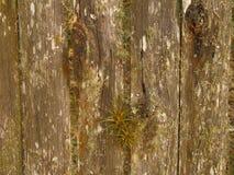 παλαιό κατασκευασμένο δάσος Στοκ Φωτογραφία