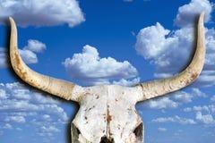 Παλαιό κρανίο αγελάδων Στοκ Εικόνα
