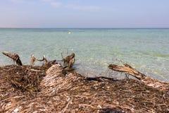 Παλαιό μέτωπο δέντρων και άσπρο seagull στο μπλε θαλάσσιο νερό στο τροπικό θέρετρο seascape θάλασσας μπλε βράχων καλοκαίρι ουρανο στοκ φωτογραφία με δικαίωμα ελεύθερης χρήσης