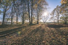 παλαιό μεγάλο δέντρο στο υπόβαθρο χρώματος με το μπλε ουρανό - εκλεκτής ποιότητας ταινία EF Στοκ εικόνες με δικαίωμα ελεύθερης χρήσης