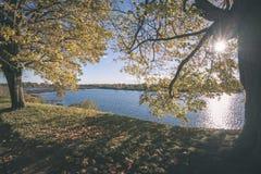 παλαιό μεγάλο δέντρο στο υπόβαθρο χρώματος με το μπλε ουρανό - εκλεκτής ποιότητας ταινία EF Στοκ Εικόνα
