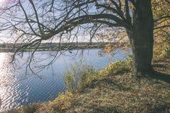 παλαιό μεγάλο δέντρο στο υπόβαθρο χρώματος με το μπλε ουρανό - εκλεκτής ποιότητας ταινία EF Στοκ Εικόνες