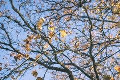 παλαιό μεγάλο δέντρο στο υπόβαθρο χρώματος με το μπλε ουρανό - εκλεκτής ποιότητας ταινία EF Στοκ εικόνα με δικαίωμα ελεύθερης χρήσης
