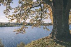 παλαιό μεγάλο δέντρο στο υπόβαθρο χρώματος με το μπλε ουρανό - εκλεκτής ποιότητας ταινία EF Στοκ φωτογραφίες με δικαίωμα ελεύθερης χρήσης