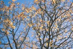 παλαιό μεγάλο δέντρο στο υπόβαθρο χρώματος με το μπλε ουρανό - εκλεκτής ποιότητας ταινία EF Στοκ Φωτογραφίες