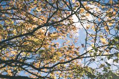 παλαιό μεγάλο δέντρο στο υπόβαθρο χρώματος με το μπλε ουρανό - εκλεκτής ποιότητας ταινία EF Στοκ Φωτογραφία