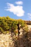Παλαιό μεσογειακό σπίτι με την αναρρίχηση των εγκαταστάσεων, μπλε ουρανός στοκ φωτογραφίες με δικαίωμα ελεύθερης χρήσης