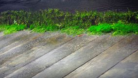 Παλαιό ξύλινο πάτωμα με το βρύο Στοκ εικόνες με δικαίωμα ελεύθερης χρήσης