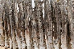 Παλαιό ξύλο ενός groyne Στοκ Φωτογραφίες