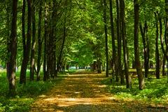 παλαιό πάρκο αλεών Στοκ εικόνες με δικαίωμα ελεύθερης χρήσης