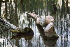 Παλαιό πάρκο, εκατονταετές πάρκο, πεσμένο δέντρο, λίμνη λάσπης Στοκ φωτογραφία με δικαίωμα ελεύθερης χρήσης