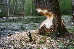 Παλαιό πάρκο, εκατονταετές πάρκο, πεσμένο δέντρο, λίμνη λάσπης Στοκ φωτογραφίες με δικαίωμα ελεύθερης χρήσης